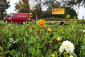 Blumen selber pflücken in Peine.