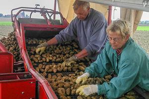 Kartoffeln kaufen in Peine.