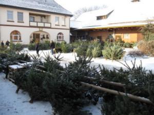 Weihnachtsbaum-Verkauf auf dem Hof Behrens